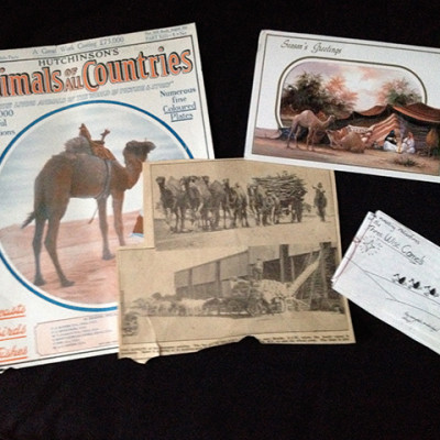 Camel reference materials from Andrew's Grandpa's archive. Grandpa was a super artist.